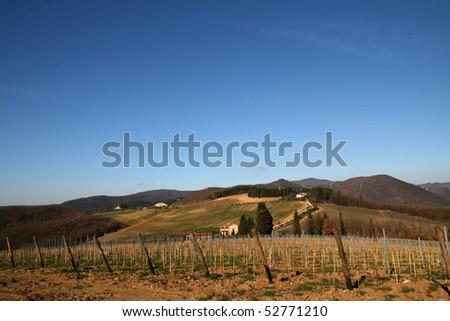 Tuscany Vineyard and  Landscape - stock photo