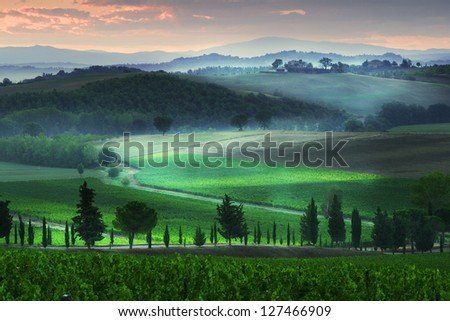 Tuscany vineyard in the morning - stock photo