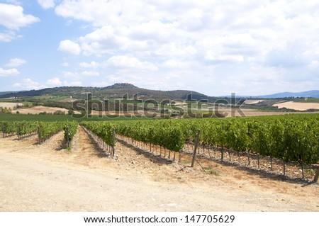 Tuscany vineyards in Chianti region, Italy. - stock photo