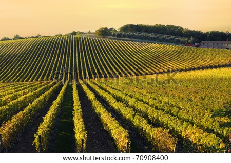 Tuscany vineyards in fall - stock photo