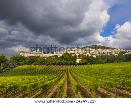 Tuscany vineyards with the town of Assisi, Tuscany, Italy in the background - stock photo