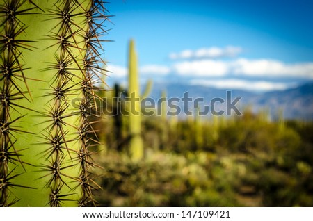 Tuscon View - stock photo