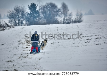 TUSNAD, ROMANIA - 28 january 2017: Unidentified man participating in the Free Dog Sled Racing Contest with dogs. On January 30, 2017 in TUSNAD, Romania