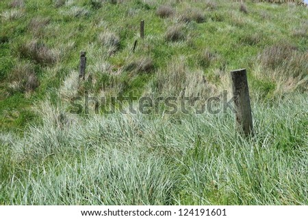 Tussock grass in Catlins, Southland, New Zealand. - stock photo