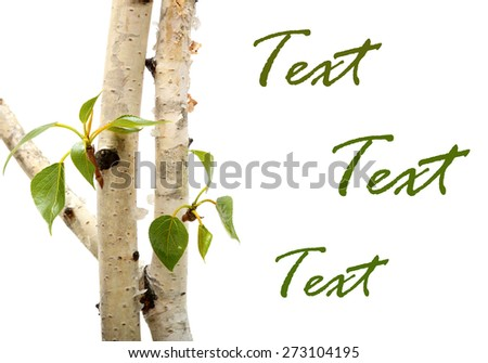 Twig and green leaf frame isolated on white background. birch - stock photo