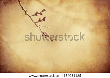 Twig from a tree with swollen buds on blurred vintage background