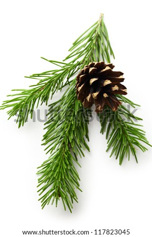 Twig of evergreen fir and cone - stock photo
