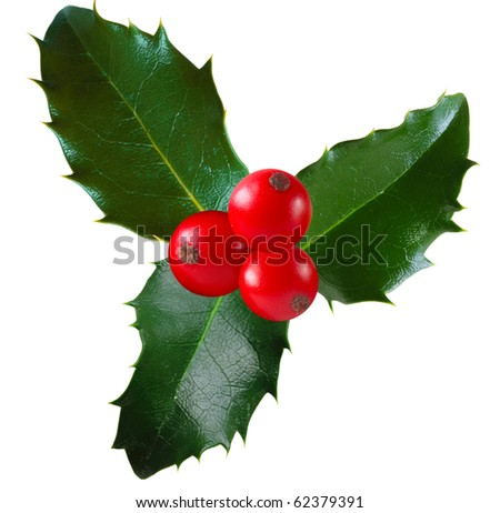 Twig of holly with berry and leaf isolated on white - stock photo