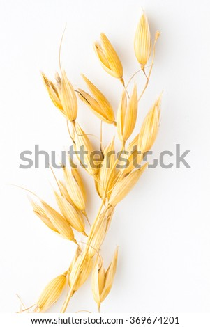 Twig of oats on a white background. Top view - stock photo