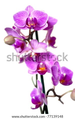 Twig of orchid lilac flowers on light background. Shallow DOF - stock photo