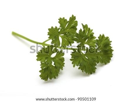 twig of parsley on white - stock photo
