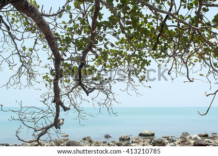 Twig trees of big tree at by sea - stock photo