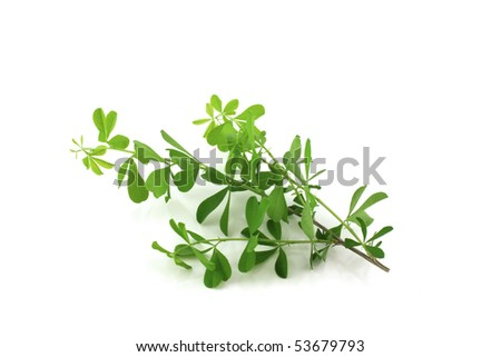 stock-photo-twig-with-green-leaves-53679