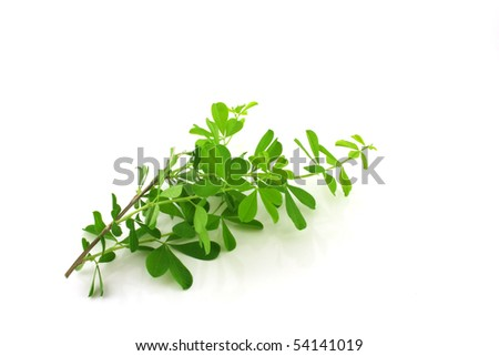 Twig with green leaves over white