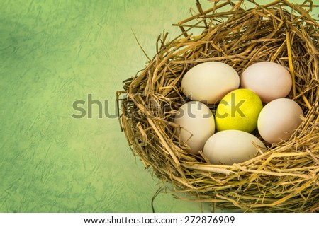 twigs nest with the white egg and one of different or unique , retro and vintage color style - stock photo