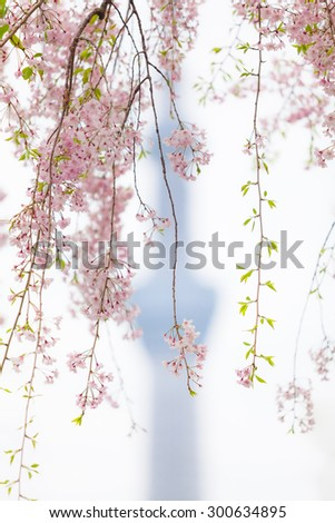 Twigs of a cherry tree in front of a TV tower silhouette/Romantic Tokyo - stock photo