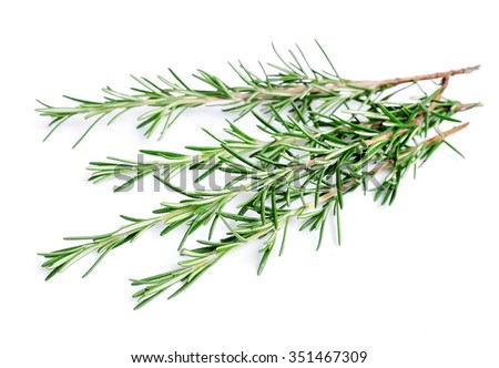 Twigs of rosemary on a white background - stock photo