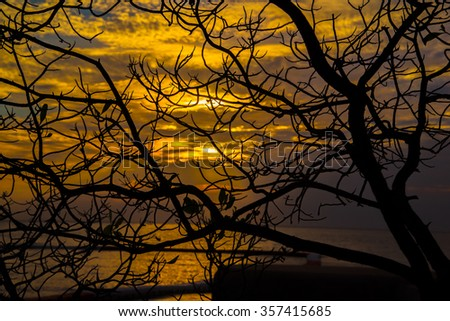 Twigs on sunset  - stock photo