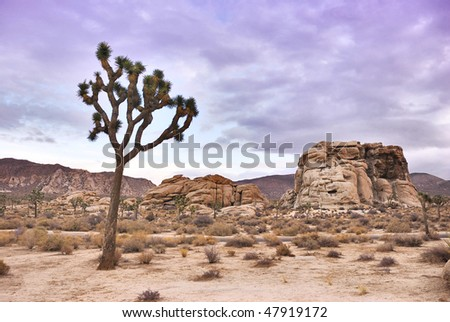 Twilight in Joshua Tree national park in California - stock photo
