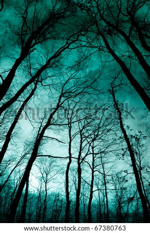 Twilight in the forest, mystic nightscape - stock photo
