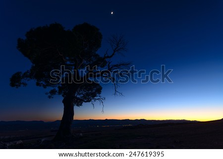 twilight sunset,  old pine tree in the national park of Sierra de Maria-Los Velez in Almeria, Spain - stock photo