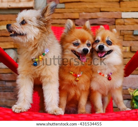 Twin puppies and their friend on a red chair