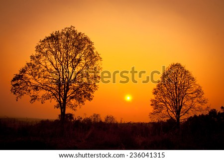 twin tree silhouette sunset , sunset with two trees and a striking sky