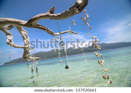 Twined sea shell - stock photo