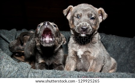 Twinkling puppy - stock photo