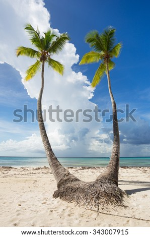 Twins Palm Trees, Saona Island in Punta Cana, Dominican Republic - stock photo