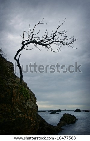 Twisted bare branched tree on a rocky cliff shore with storm clouds and ocean in the background - stock photo
