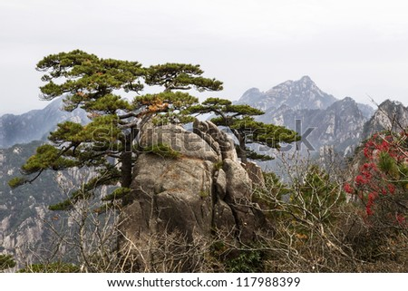 Twisted evergreen tree coming out of large rock with Yellow Mountain Valley and sky in background - stock photo