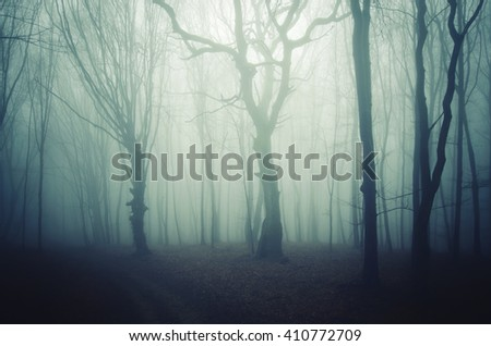 twisted ild trees in fog - stock photo