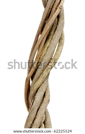 twisted roots isolated on a white background