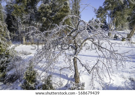 Twisted tree after the ice storm - stock photo