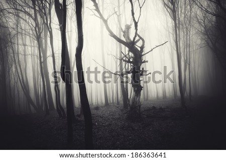 twisted tree in a misty forest - stock photo