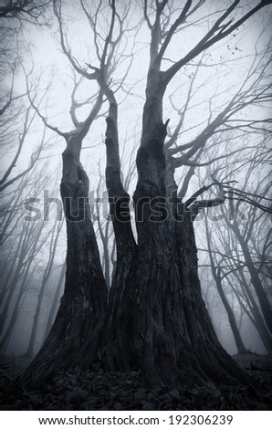 twisted tree in dark spooky forest  - stock photo