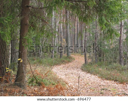 Twisting path in the autumn forest - stock photo