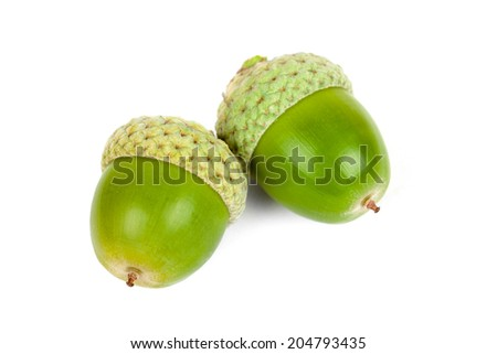 Two acorns on a white background  - stock photo
