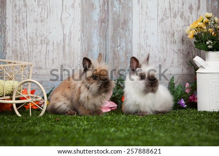 Two adorable bunnies. - stock photo