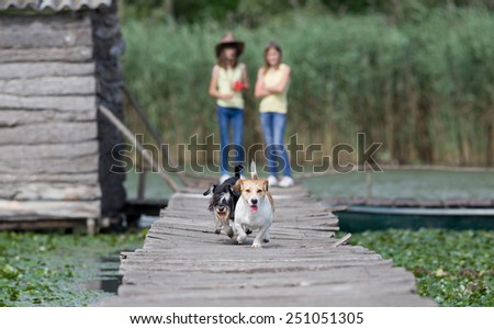 Two adorable dogs running on wooden dock on the lake - stock photo