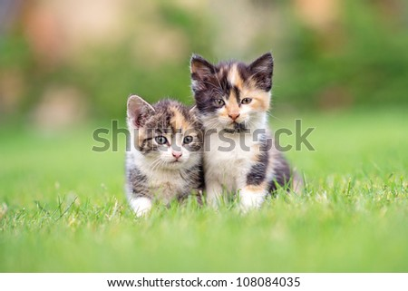 two adorable kittens in the grass - stock photo