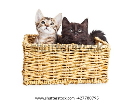Two adorable kittens in wicker basket. One black, one tabby - stock photo