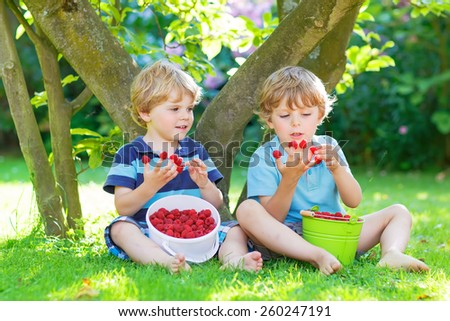 Two adorable little sibling boys eating fresh organic raspberries from home's garden, outdoors. Healthy food and snack for kids in summer. - stock photo