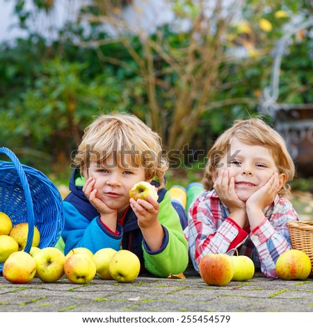 Two adorable little sibling kids eating apples in home's garden, outdoors. Own harvest. Boys in colorful rubber boots on autumn day. - stock photo