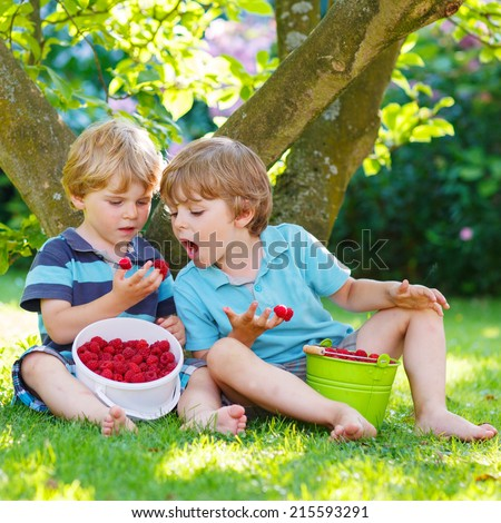 Two adorable little sibling kids eating raspberries in home's garden, outdoors. Feeding each other - stock photo