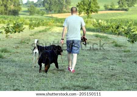 Two adorable Rottweiler dogs walking in the meadow with owner - stock photo