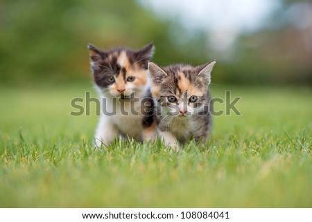 two adorable young cats in the grass - stock photo
