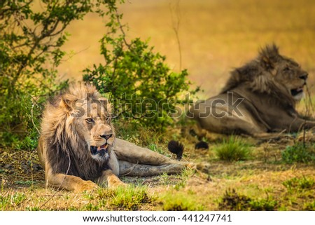 Two african males in grasslands close up Zambia - stock photo