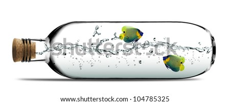 Two angelfish and water splashes inside Glass bottle with cork. - stock photo